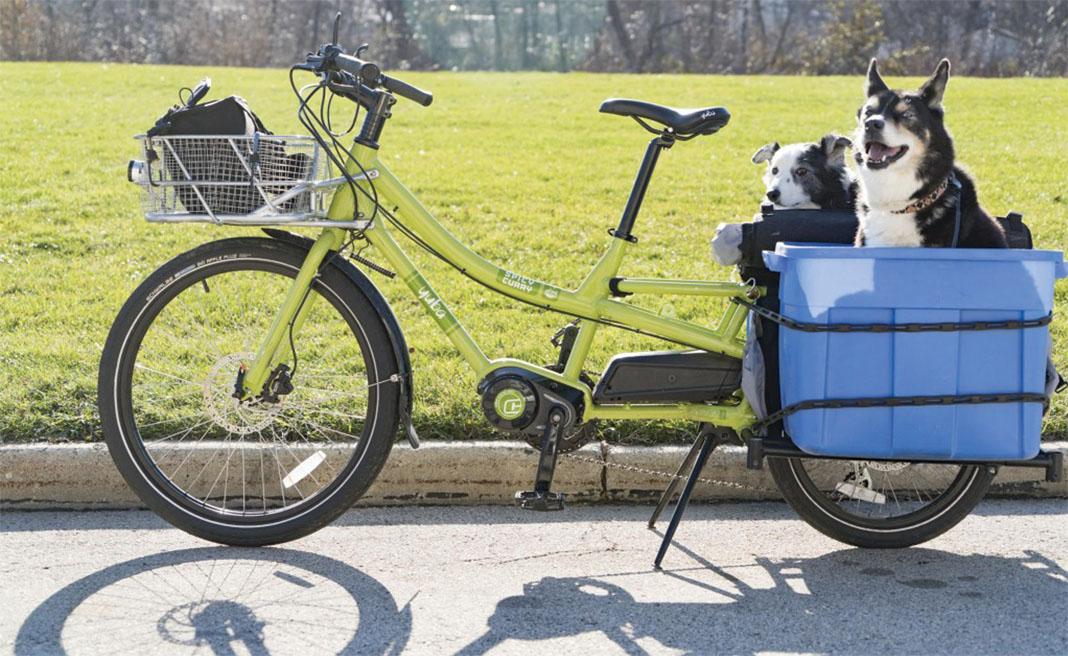Carry dog by cargo bike